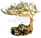 Bonsai Driftwood Aquarium Tree (4 Inch Height) Natural, Handcrafted Fish Tank Decoration | Helps Balance Water pH Levels, Stabilizes Environments | Easy to Install Photo, best price $26.99 new 2020