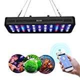 Lightimetunnel WiFi LED Aquarium Light, 165W WiFi + Dimmable Fish Tank Ligh Full Spectrum with Four Channels for Freshwater and Saltwater Marine Tanks LPS/SPS Photo, best price $145.90 new 2018
