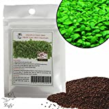 Luffy Aquarium Grass Seeds (Glossostigma Elatinoides) - 2oz Pack - Aquarium Carpet Plant - Easy to Plant & Maintain - Creates a Natural Ecosystem for Your Fish - Ideal for Beginners and Pros Photo, best price $14.95 new 2019