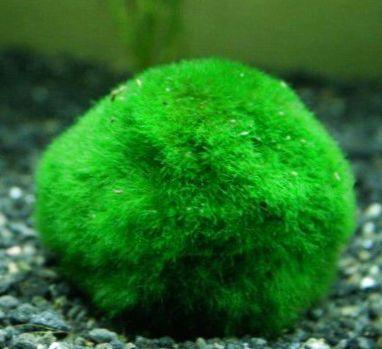 Sunlera Kunststoff Aquarienpflanzen Fisch-Riff-Marinebeh/älter Tweezer Clip 50//70cm L/änge