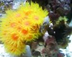 Photo Sun-Flower Coral Orange, yellow